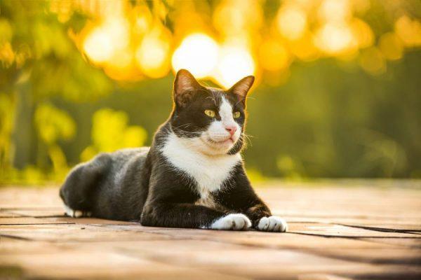 Как наказать кошку за плохое поведение? Советы на Petstory
