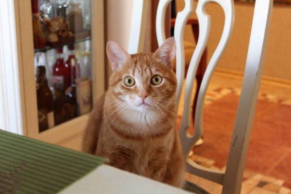 Любопытные и малоизвестные факты о кошках