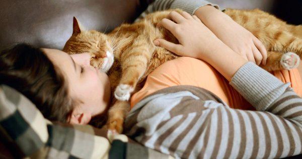 Кошка в доме укрепляет здоровье людей: 10 доказанных фактов