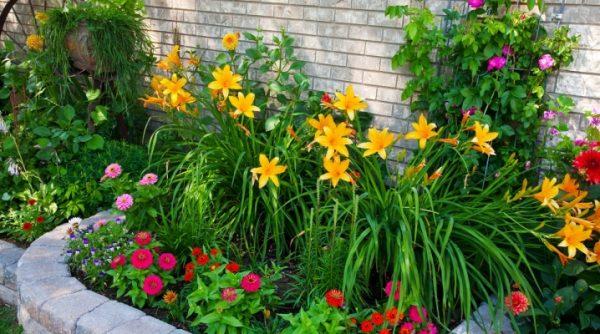 Многолетние цветы для дачи, не требующие ухода (37 фото): обзор самых неприхотливых многолетников для сада. Красивые влаголюбивые, теневыносливые и другие растения