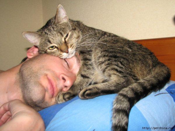 кошки-лекари - Самое интересное в блогах