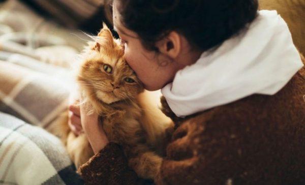 Понимают ли кошки и коты человеческую речь