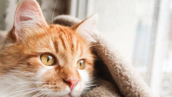 Мочекаменная болезнь у кошек 🐈: причины, симптомы и лечение