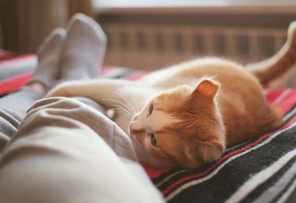 Почему кошки спят в ногах у хозяина? Что это значит для человека? Что делать, если кот постоянно ложится возле хозяйки ночью?