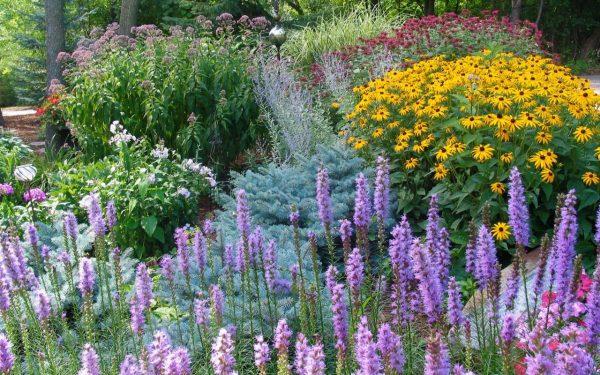 Посадка цветов осенью: какие цветы можно и нужно сеять под зиму | Zelendvir