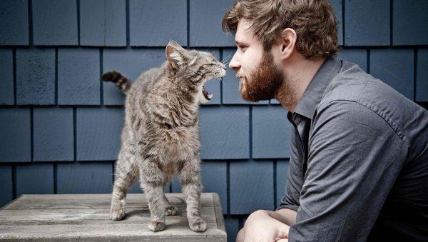 Биолог о поведении кошек и собак