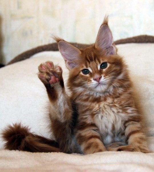 10 признаков того, что ваш котик вас любит
