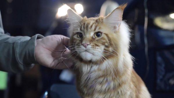 НЕ СМЕШНЫЕ КОТЫ. Наши любимые кошки (часть 1) - YouTube