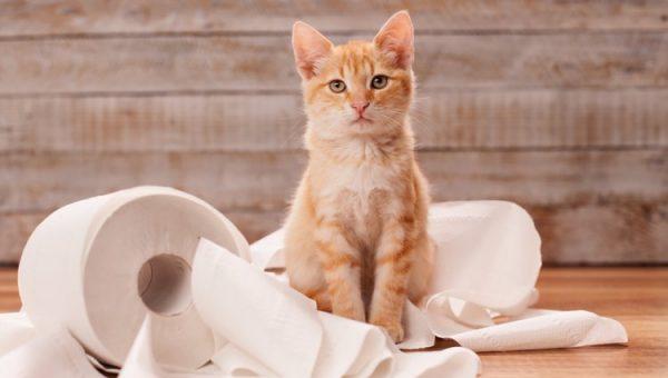 Как приучить котенка к туалету? Рекомендации ветеринаров.