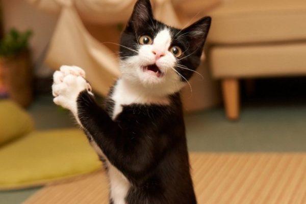 Учёные: кошка в доме несёт серьёзную угрозу здоровьюа