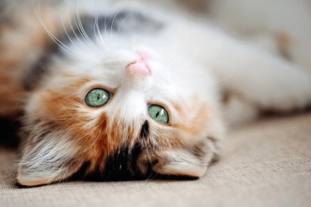 Кошка дома: образ жизни домашних кошек