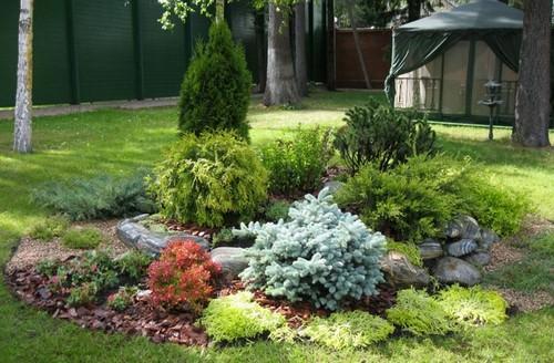 Хвойные растения для сада: названия, фото, декоративные хвойники, ель, лиственное дерево, сосна, теплолюбивые на участке