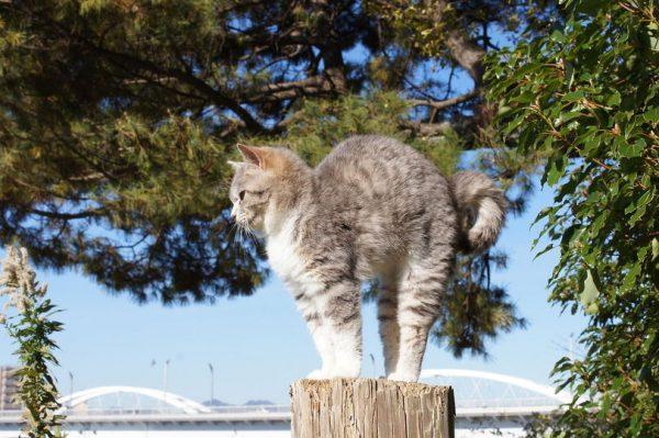 Фото Серый кот выгнул спину на фоне голубого неба