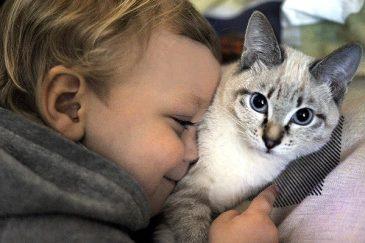 Как содержать кошку в доме - Экология человека