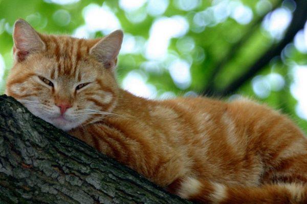 Как одомашнили кошку | Кот и кошка