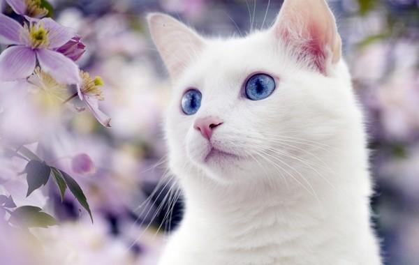Наши любимые кошки и их мартовский день