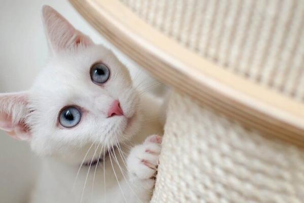 Трюки которым можно научить кошку   Пикабу