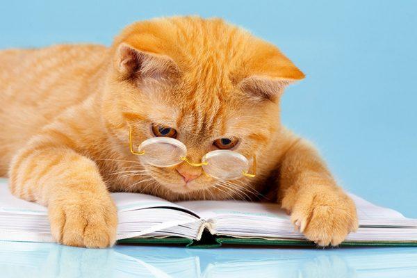 """Рекомендации по правильному воспитанию кошки и выбору наказания за проделки   Блог ветклиники """"Беланта"""""""
