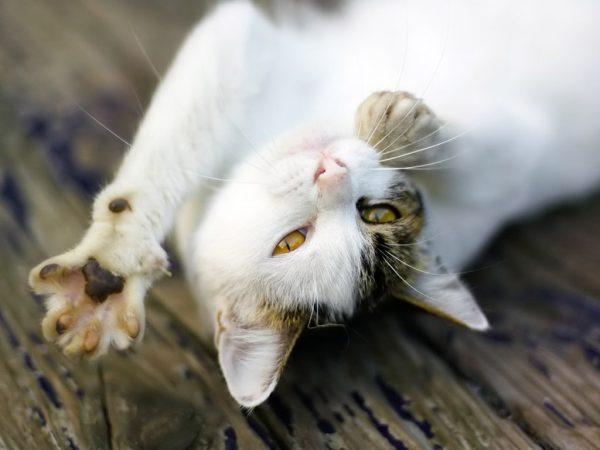 Фотография кот Лапы животное