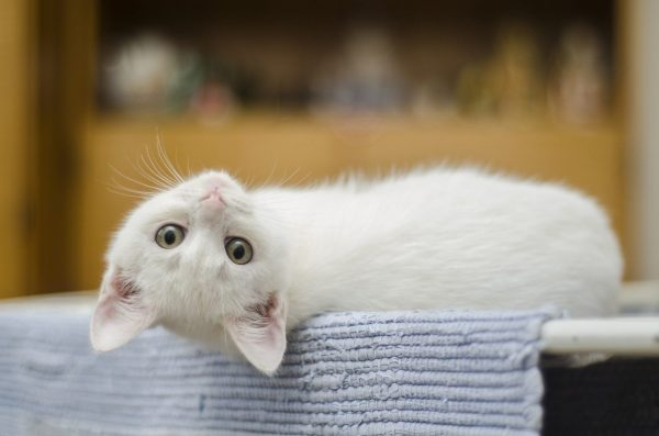 5 частых ошибках при воспитании котенка раскрыли ветеринары