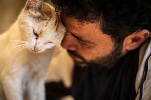 Если к вам в дом приходит кошка — что это значит?   Новости Туапсе.