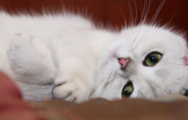 Как понять что ваша кошка довольна жизнью: признаки