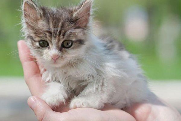 Приметы про кошек, поверья, суеверия: все известные сегодня - Ветеринарная клиника