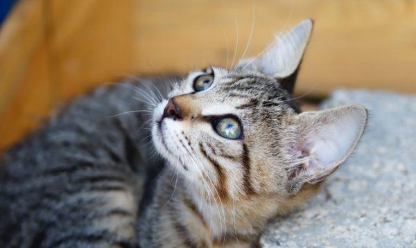 Магия кошки. Серый, рыжий питомец - животные, кошки, рыжик кошки, серые кошки, магия кошек разного цвета