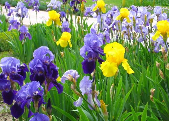 Многолетние садовые цветы: фото и описание