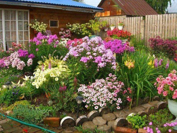 Какие многолетние цветы посадить в саду летом | Цветы в саду (Усадьба)